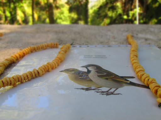 Biodiversity inspires us! | A biodiversidade inspira-nos!